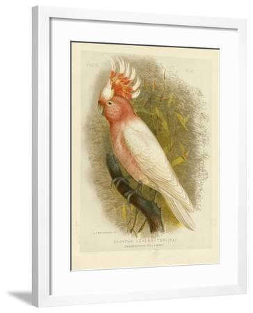 Leadbeater's Cockatoo, 1891-Gracius Broinowski-Framed Giclee Print