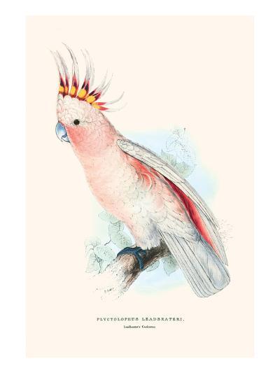 Leadbeater's Cockatoo - Cocatua Leadbeateri-Edward Lear-Art Print