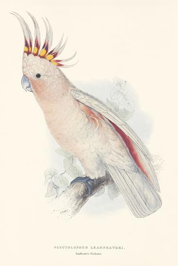 Leadbeater's Cockatoo-Edward Lear-Premium Giclee Print