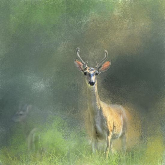 Leader of the Herd White Tailed Buck-Jai Johnson-Giclee Print