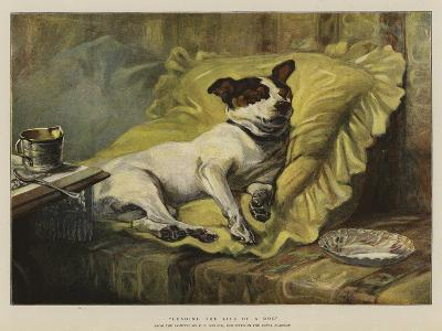 Leading the Life of a Dog--Giclee Print