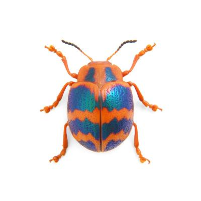 Leaf Beetle-Christopher Marley-Photographic Print