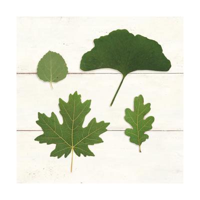 https://imgc.artprintimages.com/img/print/leaf-chart-v-shiplap_u-l-q1ddtsl0.jpg?p=0