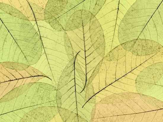 Leaf Collage I-Kathy Mahan-Photographic Print