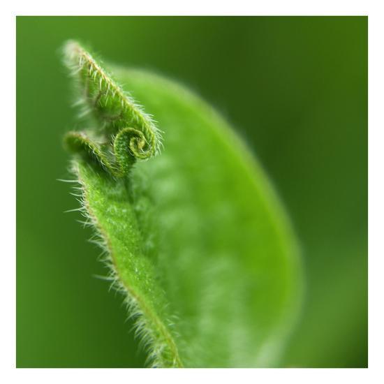 Leaf Curl-Karen Ussery-Premium Photographic Print
