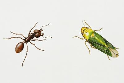 https://imgc.artprintimages.com/img/print/leaf-cutter-ant-atta-cephalotes_u-l-puyar30.jpg?p=0