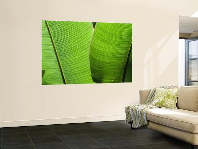 Leaf Fronds-Christer Fredriksson-Wall Mural