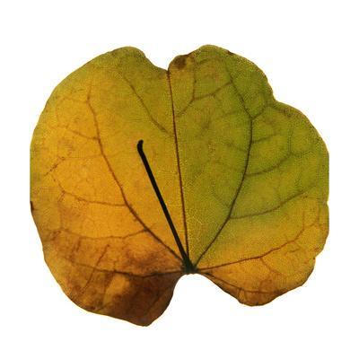 https://imgc.artprintimages.com/img/print/leaf-inflorescence-iii_u-l-q1birrk0.jpg?p=0