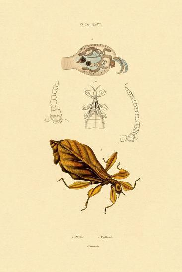 Leaf Insect, 1833-39--Giclee Print