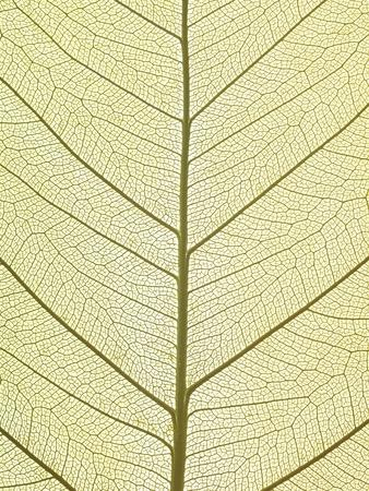 https://imgc.artprintimages.com/img/print/leaf-of-a-poplar-macro-shot_u-l-pzkqcz0.jpg?p=0
