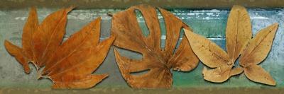 https://imgc.artprintimages.com/img/print/leaf-panel-iii_u-l-pxk5t20.jpg?p=0