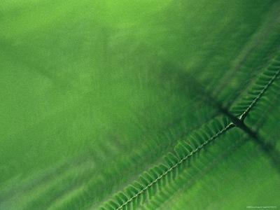 Leaf Patterns-Mattias Klum-Photographic Print