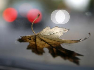 https://imgc.artprintimages.com/img/print/leaf-reflections_u-l-p26ce10.jpg?p=0