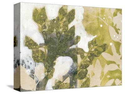 Leaf Spray II-Jennifer Goldberger-Stretched Canvas Print