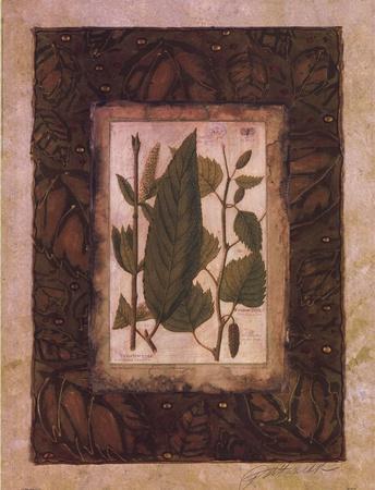 https://imgc.artprintimages.com/img/print/leaf-study-i_u-l-f8im370.jpg?p=0