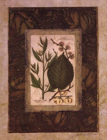 https://imgc.artprintimages.com/img/print/leaf-study-ii_u-l-f8im3u0.jpg?p=0