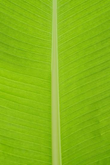 Leaf Texture I-Cora Niele-Photographic Print
