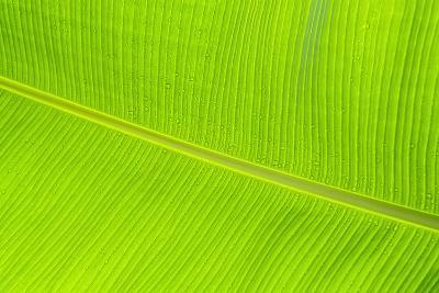 Leaf Texture II-Cora Niele-Photographic Print