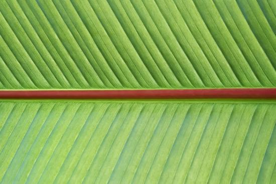 Leaf Texture V-Cora Niele-Photographic Print