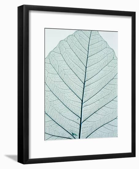 Leaf vein-Josh Westrich-Framed Photographic Print
