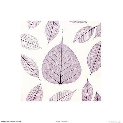 https://imgc.artprintimages.com/img/print/leaf-x-ray_u-l-f8tts00.jpg?p=0