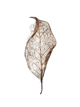 https://imgc.artprintimages.com/img/print/leaf_u-l-q1g63ge0.jpg?p=0