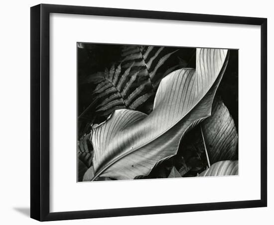 Leafs and Ferns, Hawaii, 1979-Brett Weston-Framed Photographic Print