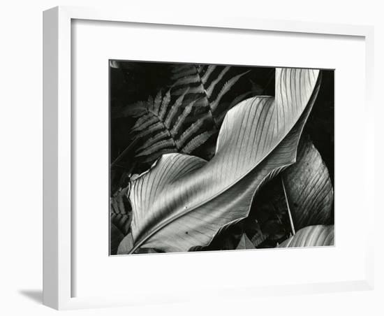 Leafs and Ferns, Hawaii, 1979-Brett Weston-Framed Photographic Print