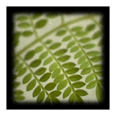 Leafy Fern-June Hunter-Art Print