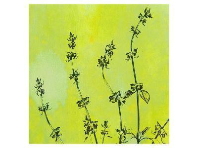 Leafy Green 1--Art Print