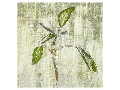 Leafy Green 4--Art Print