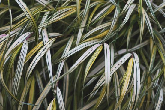 Leafy IV-Elizabeth Urquhart-Photographic Print
