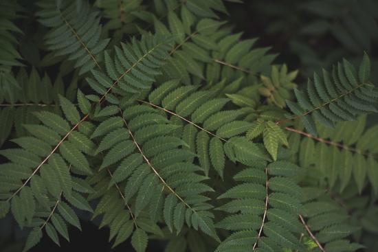 Leafy VI-Elizabeth Urquhart-Photographic Print