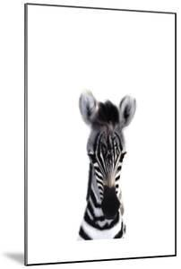 Baby Zebra by Leah Straatsma