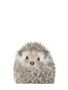 Hedgehog by Leah Straatsma