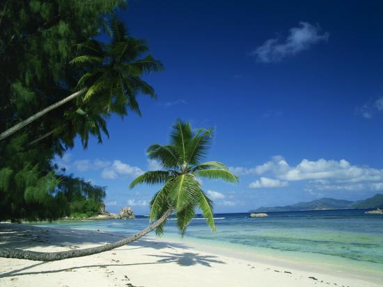 Leaning Palm Tree and Beach, Anse Severe, La Digue, Seychelles, Indian Ocean, Africa-Lee Frost-Photographic Print