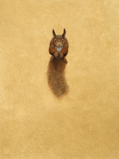 Leaping Red Squirrel-Tim Hayward-Giclee Print