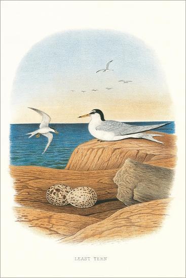 Least Tern and Eggs--Art Print