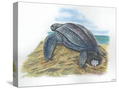Leatherback Sea Turtle Dermochelys Coriacea Laying Eggs