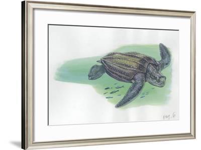 Leatherback Sea Turtle Dermochelys Coriacea--Framed Giclee Print
