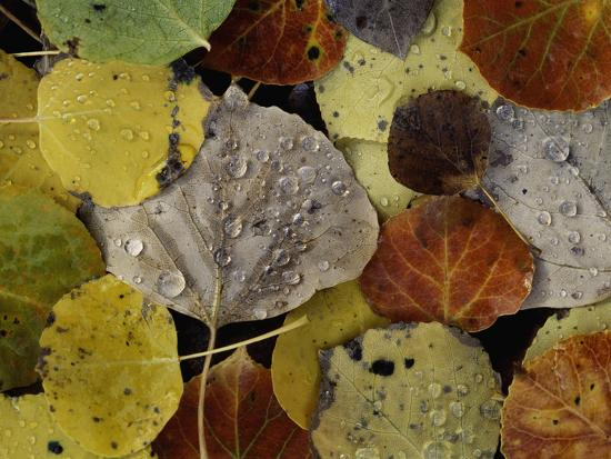 Leaves Dew Drops-Art Wolfe-Photographic Print