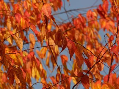 Leaves During Autumn on a Tree in Nature--Photographic Print