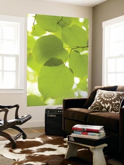 Leaves of Linden Tree, Botanic Gardens-Greg Elms-Giant Art Print