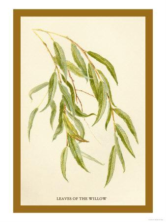 https://imgc.artprintimages.com/img/print/leaves-of-the-willow_u-l-p27w1m0.jpg?p=0