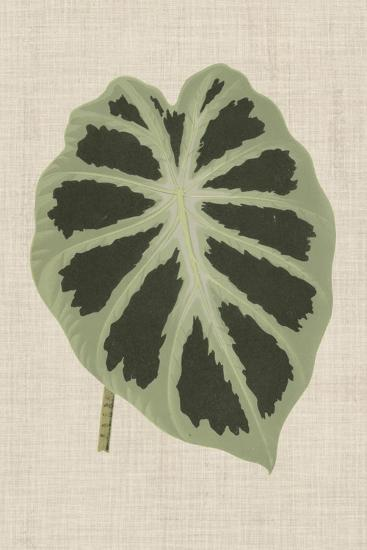 Leaves on Linen II-Unknown-Premium Giclee Print