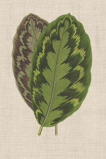 Leaves on Linen IV-Unknown-Premium Giclee Print