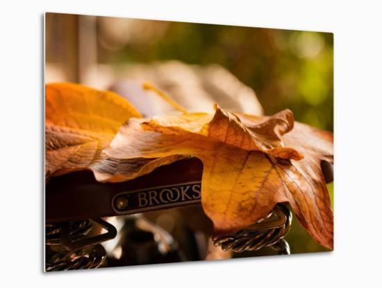 Leaves on Saddle-Philippe Sainte-Laudy-Metal Print