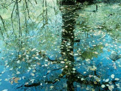 Leaves on the Water--Photographic Print