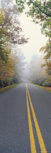 Leaves on Trees, Blue Ridge Parkway, North Carolina, USA