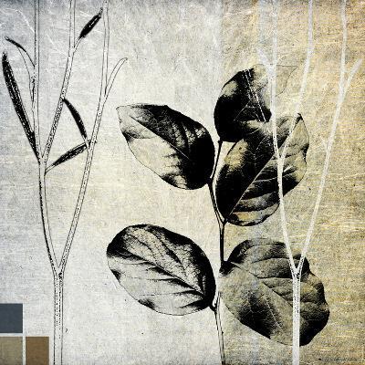 Leaves & Stems I-Catherine Kohnke-Photographic Print
